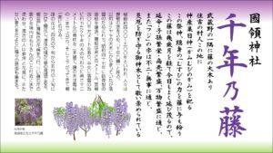 調布市國領神社千年の藤看板